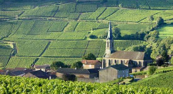 Burgundy - Thánh địa của rượu vang