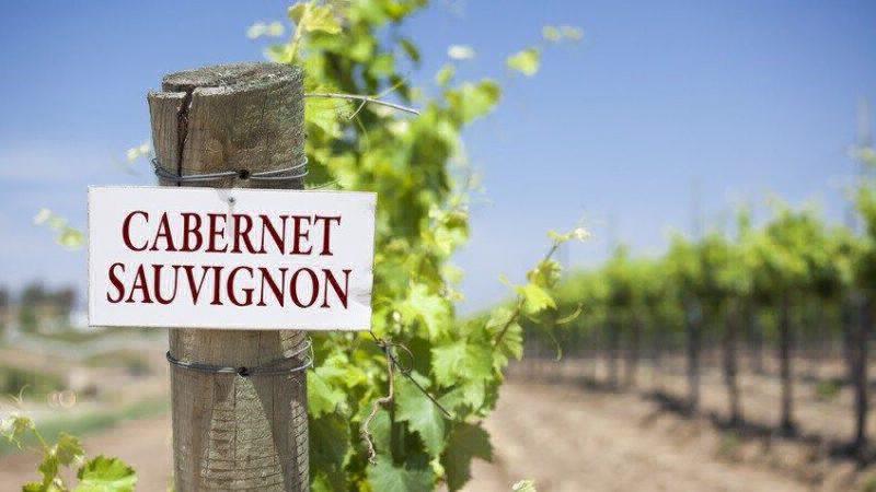 Những điều thú vị về giống nho Cabernet Sauvignon