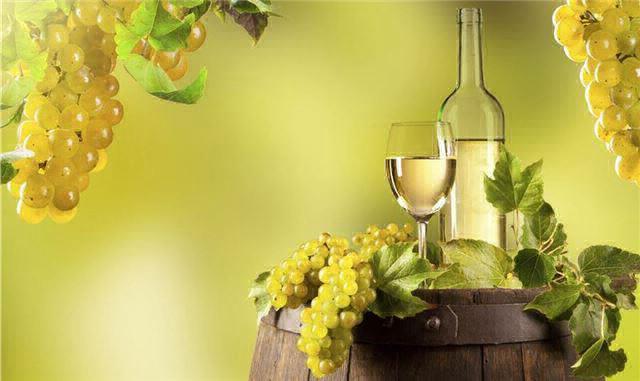 Giống nho Chardonnay – Hoàng hậu nho trắng